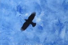 Soaring Crow